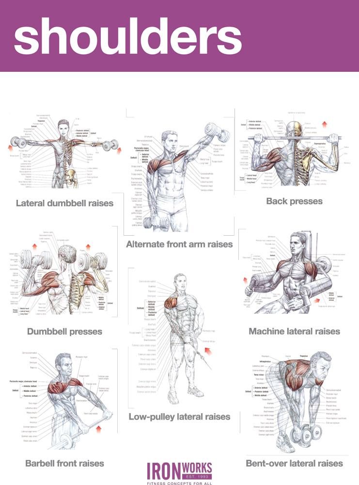 Similiar Back And Shoulder Workout Charts Keywords